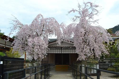 Imo_miyajima15