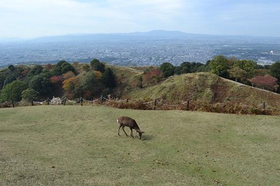 Imo_wakakusa10